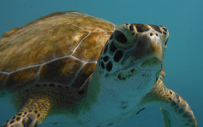 grumpy-turtle