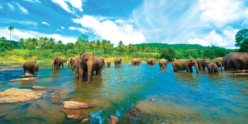 Travel blog: Tangerine Beach Hotel and the Secrets of Sri Lanka