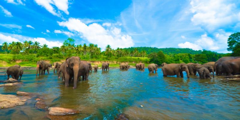 Sri lanka urlaub