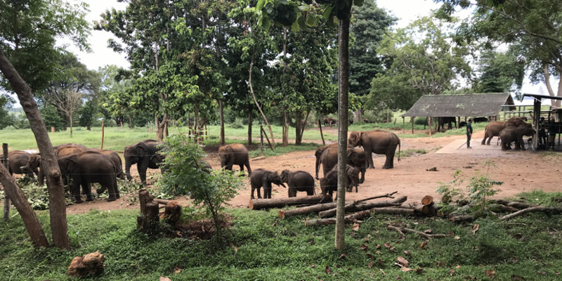 Travel blog: A 3-Pronged Approach to Discovering Sri Lanka