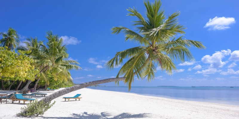 A palm tree on a beach in the Maldives